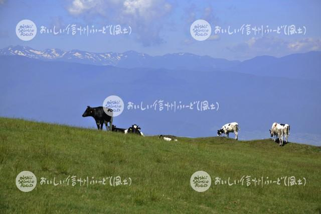 高ボッチ牧場の放牧風景