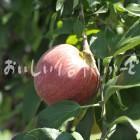 りんご【シナノレッド】(複数)