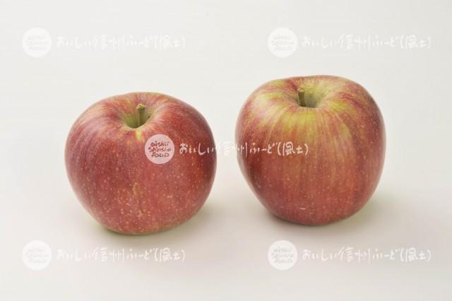 りんご【シナノレッド】(スタジオ複数)