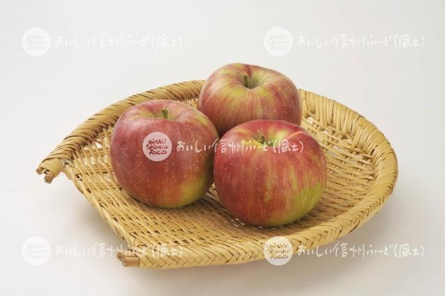 りんご【シナノレッド】(スタジオ入れ物)