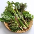 山菜7種(スタジオ盛り合わせ・ワラビ、ギョウジャニンニク、タラノメ、ウド、コゴミ、コシアブラ、ヤマブキ)