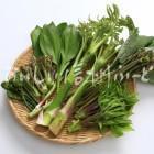 山菜7種(スタジオ盛り合わせ・ワラビ、ギョウジャニンニク、タラノメ、ウド、コシアブラ、ヤマブキ)