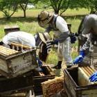 蜜蜂・養蜂場