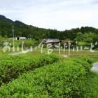 南木曽町田立の管理された山間地の水田と農村集落