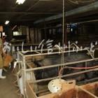 松川町の牧場(さんさんファーム)