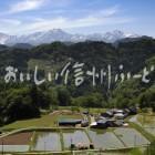 小川村の田園風景と北アルプス(田植え後)