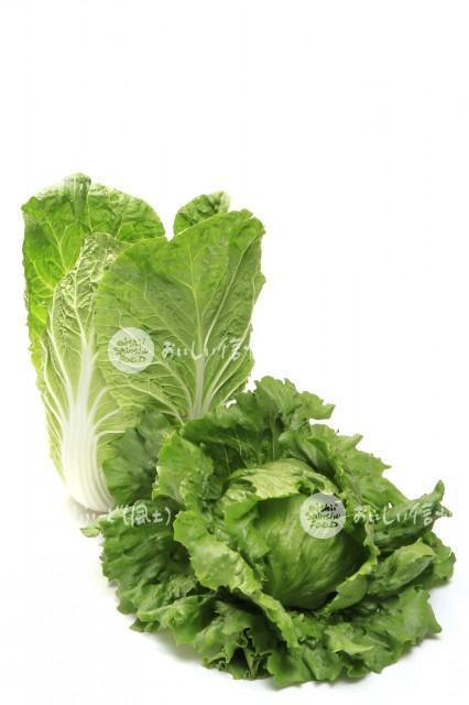 高原野菜2種(盛り合わせ・レタス、はくさい)