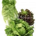 高原野菜3種(盛り合わせ・レタス、はくさい、サニーレタス)