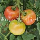 生食トマト(複数)