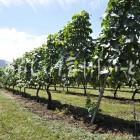 高山村の醸造用ぶどう畑