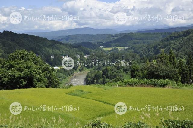 栄村の農村風景