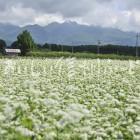 茅野市のそばの花と八ヶ岳