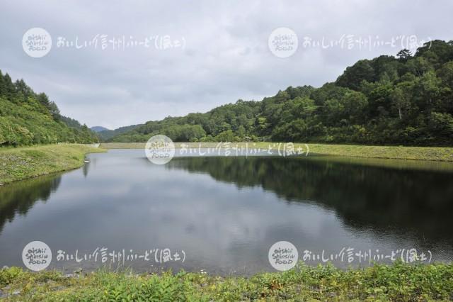 山ノ内町夜間瀬の畑かん(剣沢ダム)