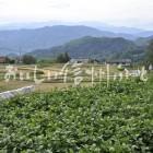 西山地区七二会の大豆畑(圃場)