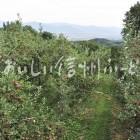 豊野町豊野りんご畑