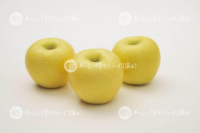 りんご【シナノゴールド】(スタジオ複数)