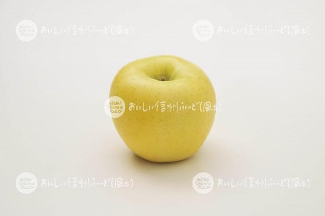 りんご【シナノゴールド】(スタジオ単体)