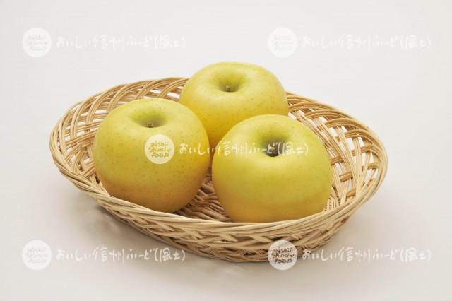 りんご【シナノゴールド】(スタジオ入れ物)