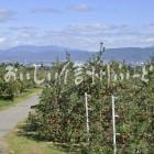 松本市梓川のりんご団地