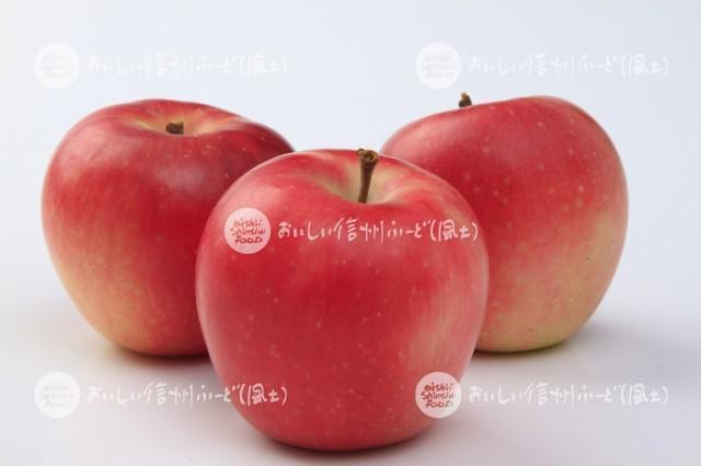 りんご【シナノピッコロ】(スタジオ複数)