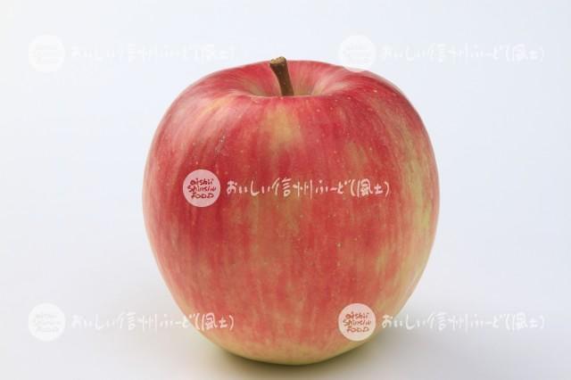 りんご【シナノドルチェ】(スタジオ単体)