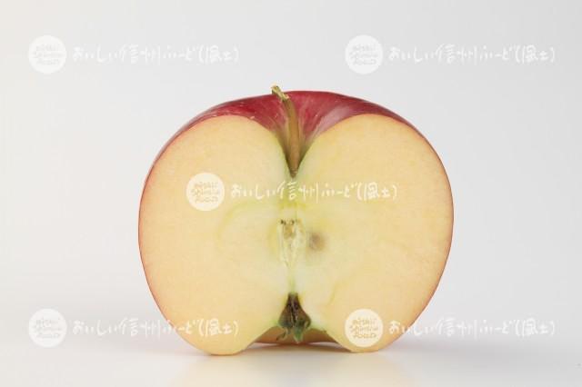 りんご【シナノプッチ】(スタジオ切り口)