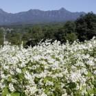 長野市戸隠のそばの花と戸隠山