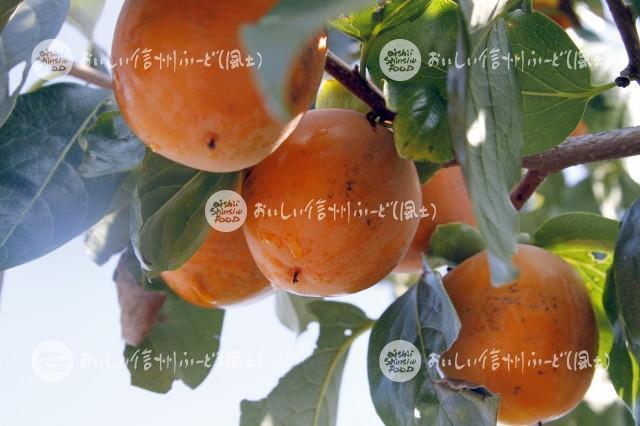 干柿【市田柿】(複数)