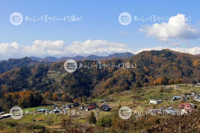 小川村の野沢菜畑と北アルプス(風景)