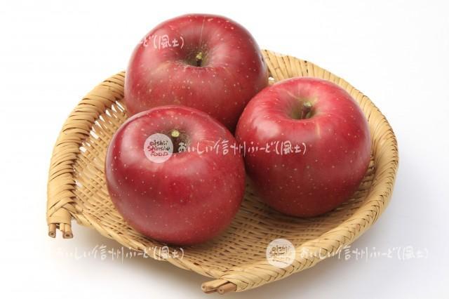 りんご【ふじ】(スタジオ入れ物)