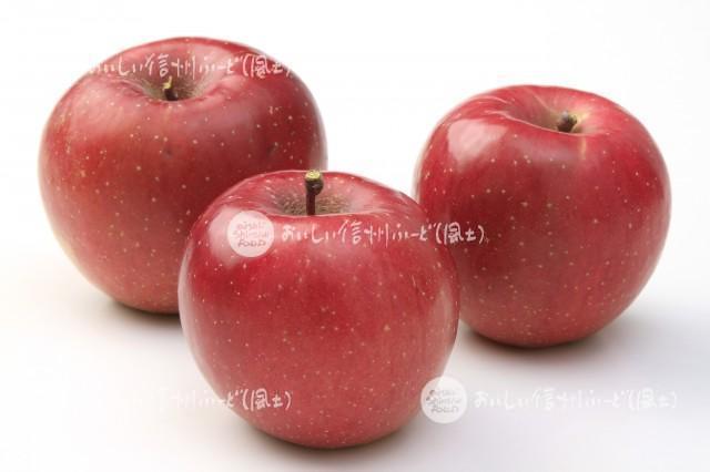 りんご【ふじ】(スタジオ複数)