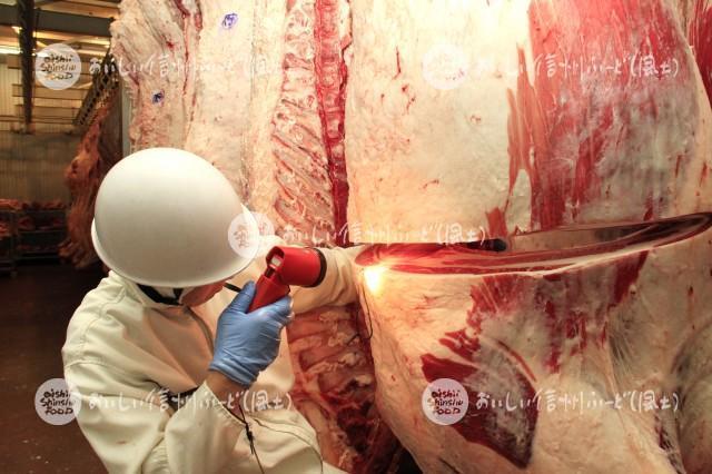 信州プレミアム牛肉(脂肪交雑[BMS]の評価風景)