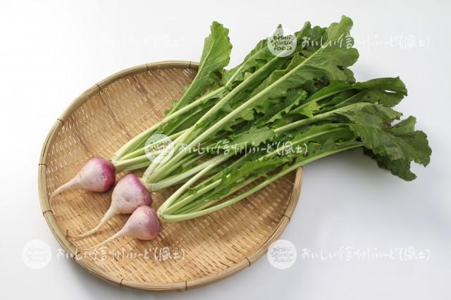 稲核菜(スタジオ入れ物)