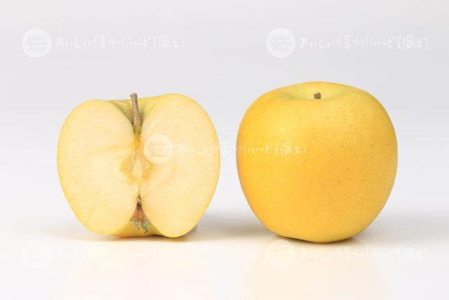 りんご「シナノゴールド」(スタジオ断面と全体)