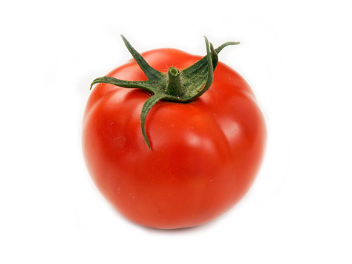 加工用トマト