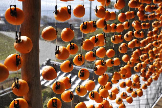 まさに上質な和菓子!信州の特産品「市田柿」の出荷が始まります!