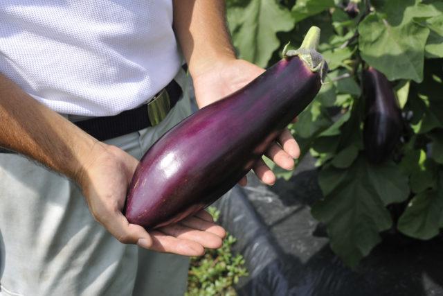 信州の伝統野菜レシピブックもうご覧になりましたか♪