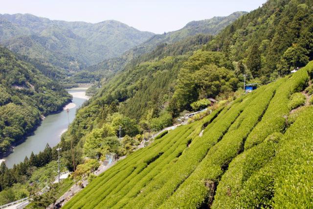 信州産のお茶「中井侍11軒のお茶」