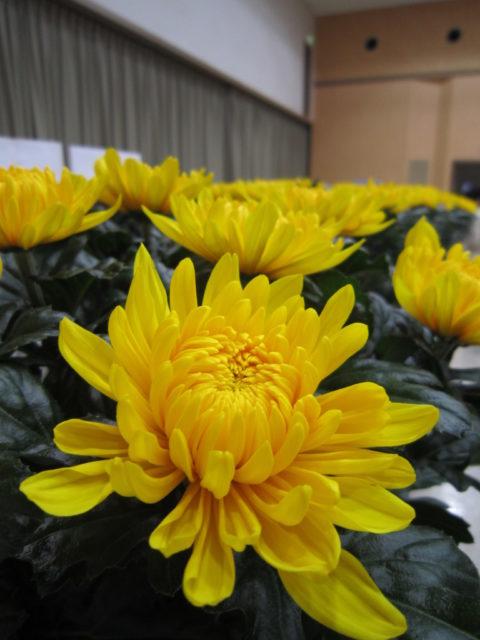 信州は花の生産も盛んです!